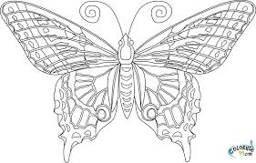 Butterfly Coloring Pages Luxury Of Butterflies For Adults
