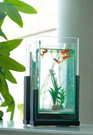 ornement aquarium archives page 4 of 14 poisson naturel