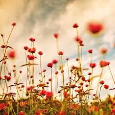 Vintage Flower Photography