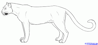 28 Collection Of Black Panther Animal Drawing