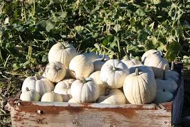 Pumpkin Patch Medford Oregon by Fort Vannoy Farms Corn Maze And Pumpkin Patch Grants Pass Or