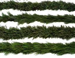 Fraser Fir Christmas Trees Nc by Fraser Fir Christmas Trees Powers Tree Farm