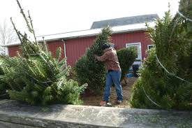 Christmas Tree Hill Shops Lancaster Pa by Where To Cut Your Own Christmas Tree In Lancaster County Local