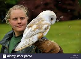 Barn Owl Handler Stock Photos & Barn Owl Handler Stock Images - Alamy Barn Owl New Zealand Birds Online Audubon California Starr Ranch Live Webcams Barn Red My Pet Pupo The Barn Owl Mouse Youtube Babyowl Explore On Deviantart Adopt An The Wildlife Trusts Wikipedia Owlrodent Research Project Vineyard Owl Lookie My Pet Growing Up Growing Up Album Imgur Made Out Of Wood And Plant Materials I Found At Parents