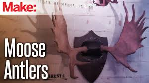 diresta mounting moose antlers youtube