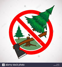 Christmas Tree Farm Eustis Fl by Cutting Down Christmas Tree Stock Photos U0026 Cutting Down Christmas