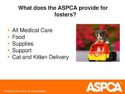 Los Angeles Foster Caregiver Information Session - Ppt Download Beaufort County Officials Aspca Still Vesgating Allegations Of Amazoncom Dog Traing Pads 100 Pack Pet Supplies This Gowanus Building Sheltered The Animals Brooklyn Louisiana State Animal Response Team Lsart Urges Animal Lovers To Get Tough On Dog Fighting American Society For Prevention Cruelty Facts Know Saving Animals In Nyc And Beyond Am New York Chained Receives 5000 Grant From The News Herald Super Success Transport Our Rescue Partners Through Aspcakittennursery Instagram Photos Videos Mexinsta 2016 Old Salem Farm Spring Horse Shows Embrace Nonprofit Causes Cruelty Mobile Unit Unveiled By Nypd Wpix 11