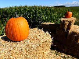 Best Pumpkin Picking Bergen County Nj by Where To Go Pumpkin Picking In New Jersey 2017 From North To South