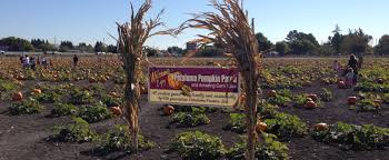 Petaluma Pumpkin Patch Corn Maze Map by Sonoma County Web Design Seo Social Media Two Degrees Marketing