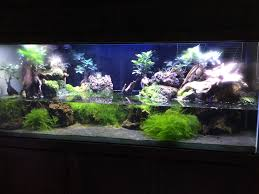 Anyone Do Aquascaping For Your Fish Tank? | SRT Hellcat Forum Aquascaping Aquarium Ideas From Aquatics Live 2012 Part 2 Youtube How To Make Trees In Planted Aquarium The Nature Style Planted Tank Awards Ultimate Shop In Raipur Fuckyeahaquascaping My 90p Tank One Month See Day 1 Here Best 25 Ideas On Pinterest Home Design Designs Aquascape Happy Journey By Adil Chaouki 1ft Cube Aquascaping Fuck Yeah Anyone Do For Your Fish Srt Hellcat Forum Archives Javidecor