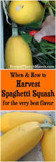 When And How Did Halloween by Best 25 Growing Squash Ideas On Pinterest Growing Zucchini