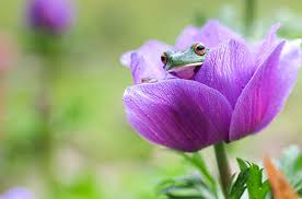 Most Beautiful Frog On The Flower