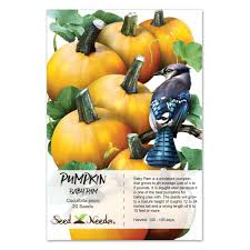 Types Of Pumpkins For Baking by Baby Pam Pie Pumpkin Seeds Cucurbita Pepo U2013 Seed Needs