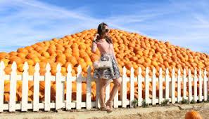 Uesugi Farms Pumpkin Patch by Pumpkin Season U2013 Trish Uy