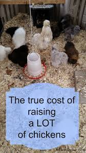 565 Best Raising Chickens Images On Pinterest | Raising Chickens ... Why Should You Compost Chicken Manure Is Naturally High In 1105 Best Backyard Project Images On Pinterest Raising Baby Chick Playground Coops Pet Chickens And Worming Backyard Controversial Here Are Tips How To Naturally Treat Coccidiosis Your Chickens Natural Treatment Of Vent Prolapse Ducks 61 To Me Raising Means Addressing Healthkeeping Deworming Homesteads