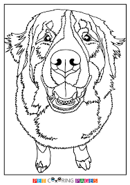 Bernese Mountain Dog Coloring Page