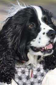 Old Westbury Gardens Dog Halloween by Li Dog Pack Walk Tm At Old Westbury Gardens Long Island Dog