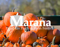 Tucson Pumpkin Patch 2017 by Maranapumpkinpatch Jpg Fit U003d1683 1317
