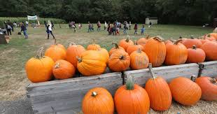 Pumpkin Patch Columbus Wi by Pumpkins Where You Can Pick Your Own In The Hudson Valley