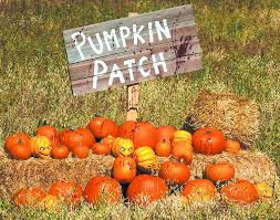 Valas Pumpkin Patch by 12 Things You Have To Do This Fall