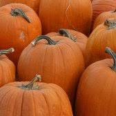 Pumpkin Patch Fresno Ca Hours by Pumpkin King Pumpkin Patch 59 Photos U0026 18 Reviews Festivals