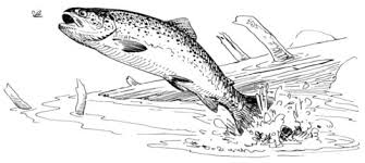 Click To See Printable Version Of Rainbow Trout Jumping Out Water Coloring Page