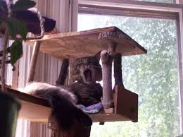 build your own cat tree plans free polite33dlh