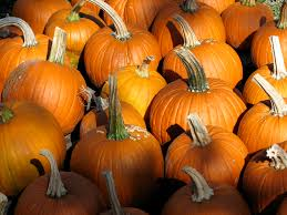 Pumpkin Patch Naples Fl by Guide To Pumpkin Picking In Florida I Love Halloween