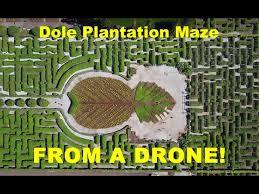 Dole Pineapple Plantation MAZE aerial drone 4K