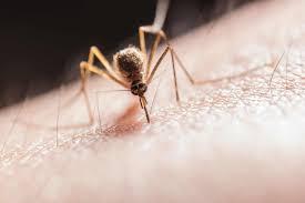 mücken vertreiben so können sie sich schützen haus100