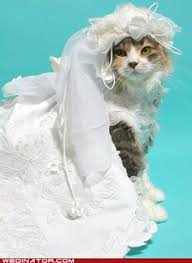 cat wedding dress black and white cats dressed like and groom he he our