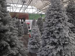 Any Southwood Cut Christmas Tree Can Be Snow Flocked Or You Pick From Several Pre Trees Curious As To How This Is Done