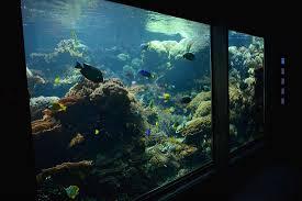 aquarium geant a visiter belgique zoo de vienne le plus vieux zoo du monde moi éléon