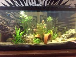 aquarium d eau douce débuter avec un aquarium d eau douce installation et mise en