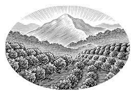 Steven Noble Illustrations Orchard Landscape