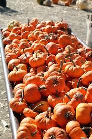 South Reno Pumpkin Patch by Die Besten 25 Local Pumpkin Patch Ideen Auf Pinterest Kürbis