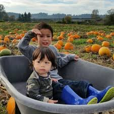 Hunter Farms Pumpkin Patch Olympia Wa by Schilter Family Farm 40 Photos U0026 45 Reviews Pumpkin Patches