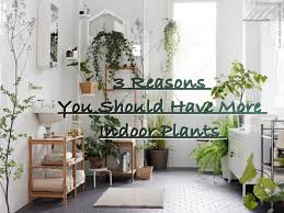 Best Plant For Bathroom by Bathroom Plants In Bathroom Main2 Plants For The Bedroom 2017 34