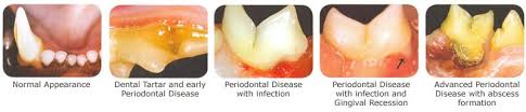 cat dental care cat dentistry redmond wa cat care clinic
