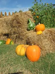 Pumpkin Patch Greenbrier Arkansas by Fall Fun At Farmland Adventures Springdale Ar