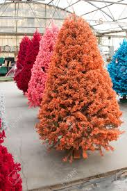 Pink Christmas Tree Flocking Spray by Shot Of Colored Christmas Trees Flocked In Different Colors Stock