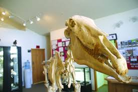Hagerman Fossil Beds National Monument by Hagerman Fossil Beds National Monument Southern Idaho Local News