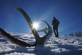 Shed Hunting Utah 2017 by 4 Veteran Tricks For Hunting Elk Sheds Petersen U0027s Hunting