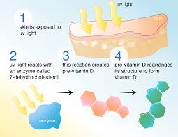 vitamin d3 cholecalciferol hopes huntington s disease information