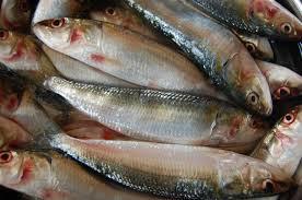 100 Mathi 9 Amazing Benefits Of Sardines FishRecipe IdeasHealthy