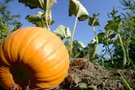 Pumpkin Patch Prince Frederick Md by University Of Maryland Gets 219 5m Gift For Scholarships Wtop