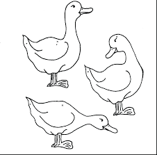 Printable Duck Dynasty Pictures Free Rubber Coloring Pages Mallard Full Size