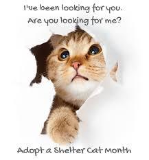 adopt a cat june is national adopt a cat month arizona pet vet