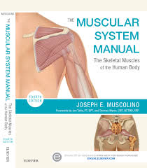 The Muscular System Manual Skeletal Muscles Of Human Body 4th Edition
