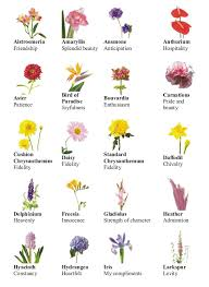 10 best 9 DIFFERENT TYPES OF BEAUTIFUL FLOWERS images on Pinterest